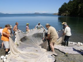 Beach seining on Lopez Island. Photo by Chris Sergeant.